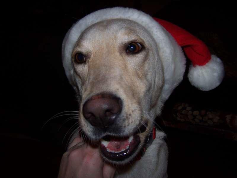 Katy Plays Santa!