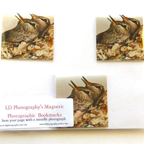 baby hummingbirds in nest photo magnetic bookmarks
