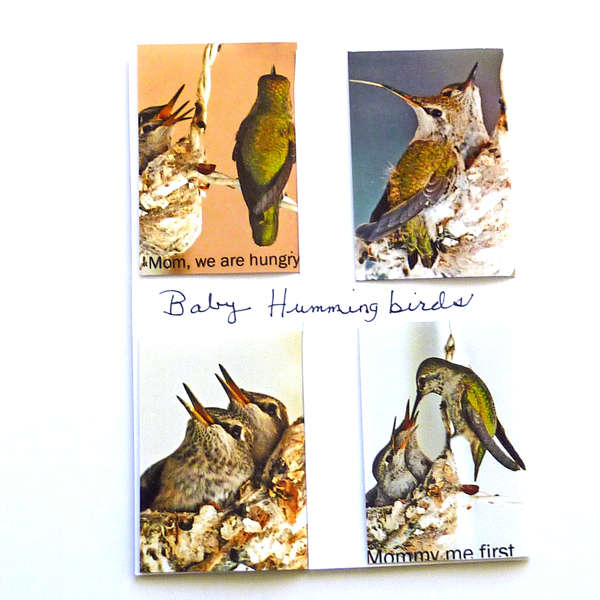 Hummingbird babies  magnetic bookmarks