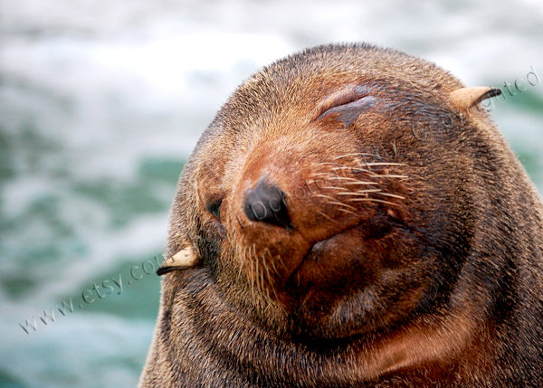 It is hard being perfect!  funny sea lion photo