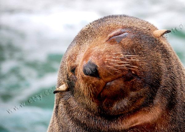 I know I am perfect! funny sea lion face
