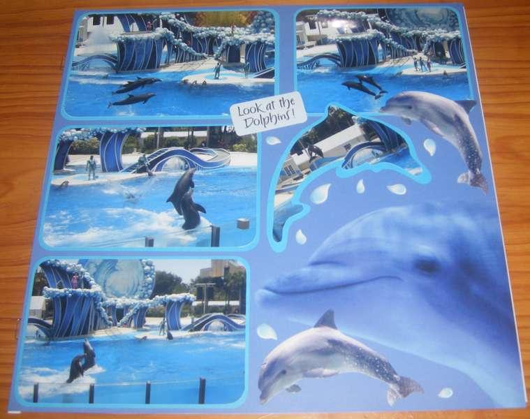 The Dolphin Show at Seaworld Orlando