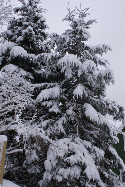 Winter Snow Storm 2-28-2013