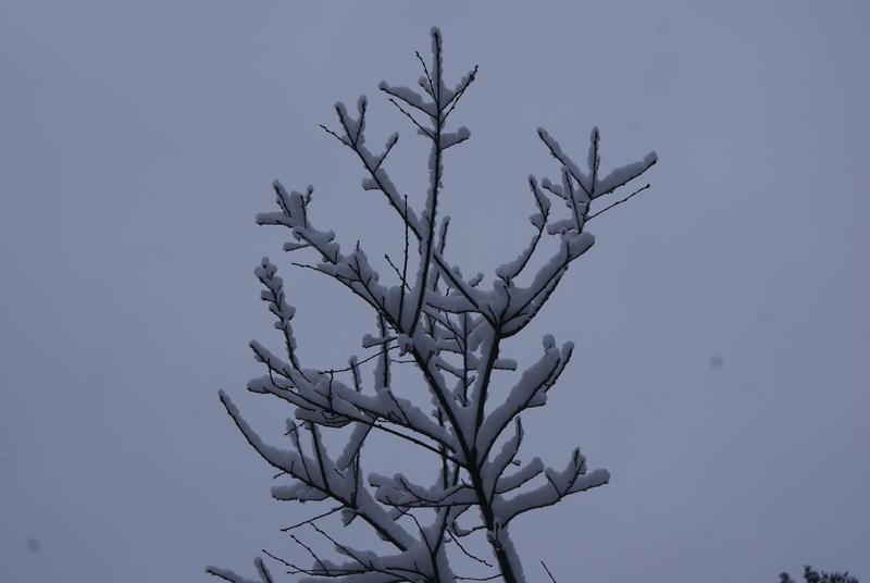 Winter Snow 2-28-13