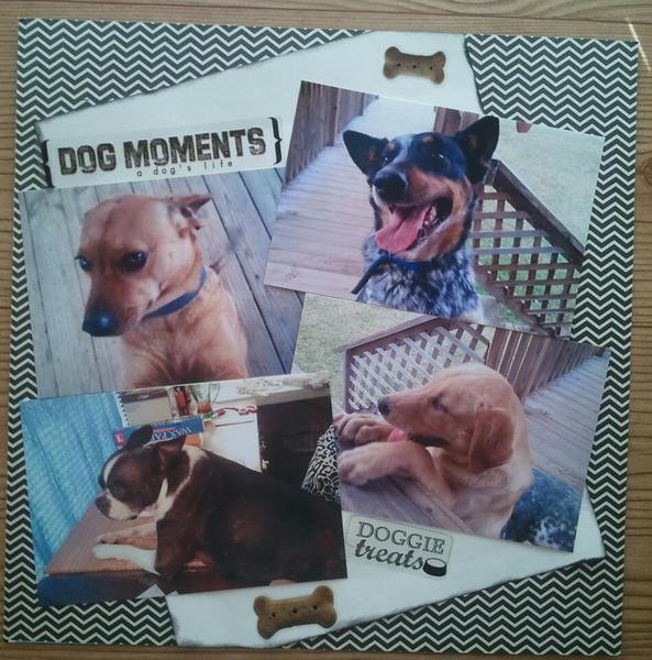 Dog Moments