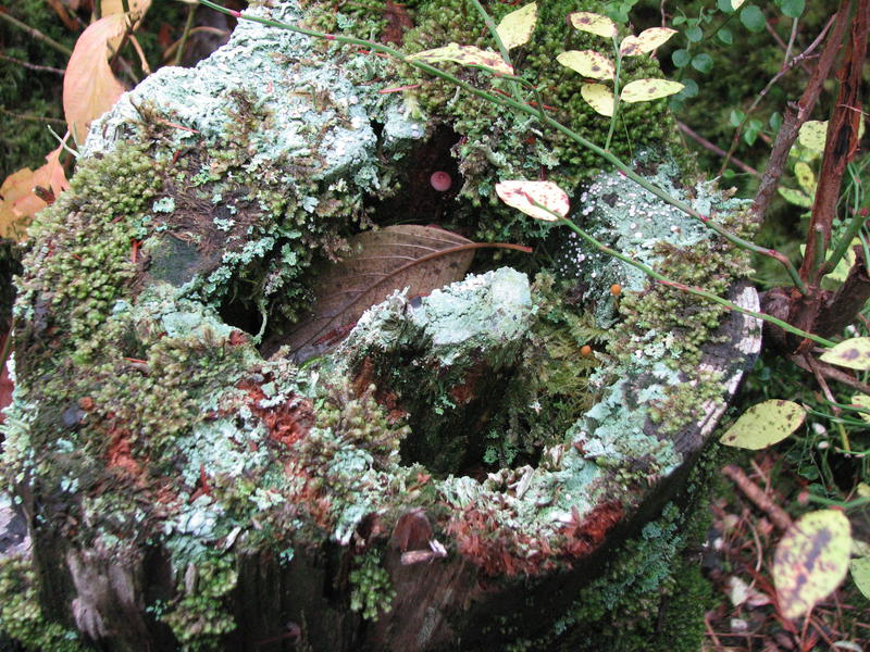 Look What Grows on a Dead Tree Stump