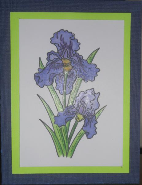 Iris done with Copic Markers