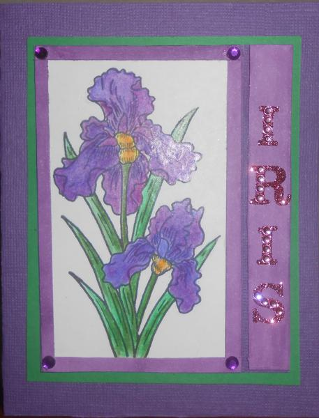 Iris done in Prisma colored pencil