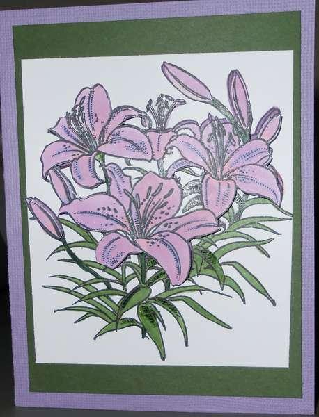 Mauve Daylilies