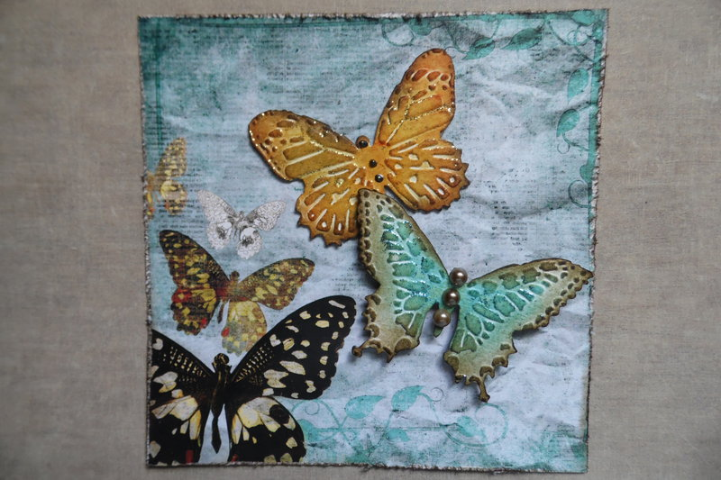 Butterfly Beauties