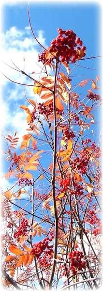 Fall in Alaska ~ 2006