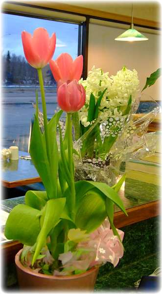 Apr 14 ~ Lovely Tulips at the Restaurant