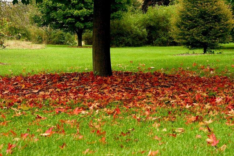 Photo Hunt...Fallen Leaves