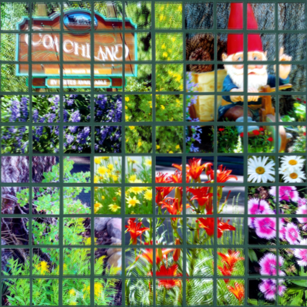 Flowers in the neighborhood