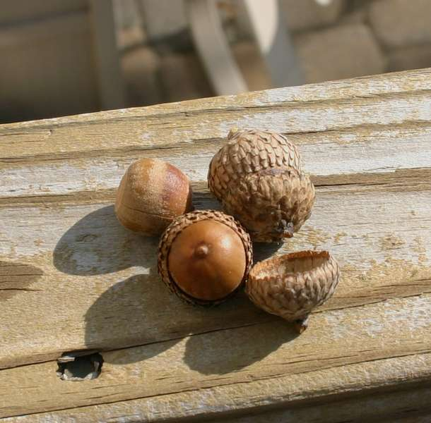 15) A Nut in the Shell {9pts.)