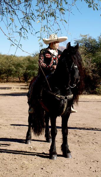 Dance horse at Festival