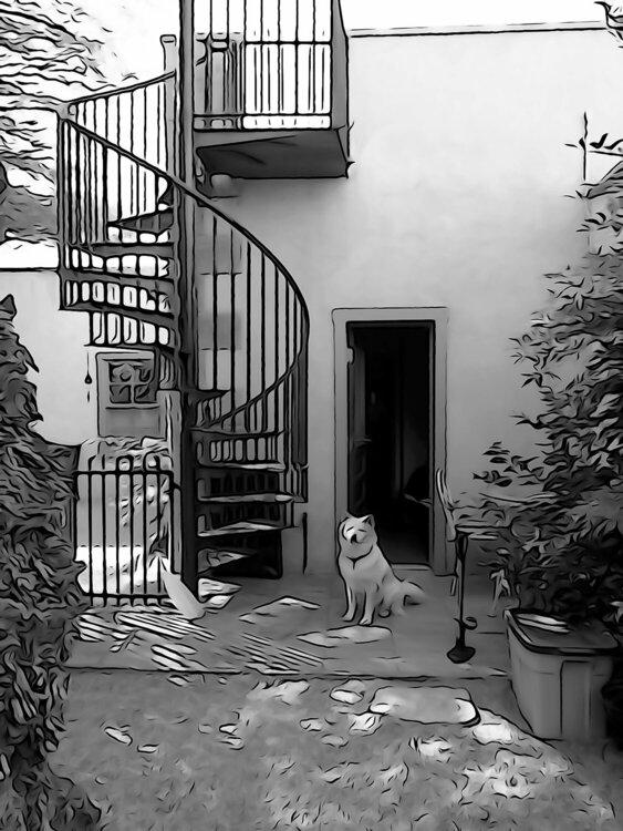 Barrio Dog