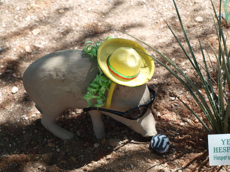 The Gardening Javelina