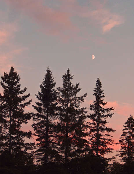 Oct 1   Sunset Behind the Pines