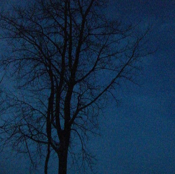 Dec 11 Midnight Tree