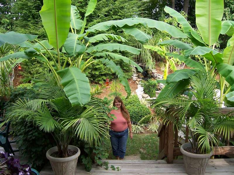 Me and my banana trees