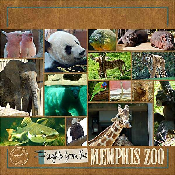 Sights from the Memphis Zoo