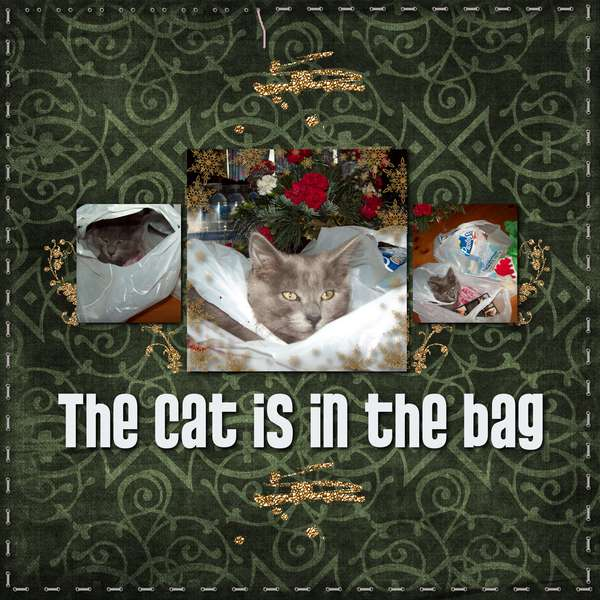 The Cat's in the Bag