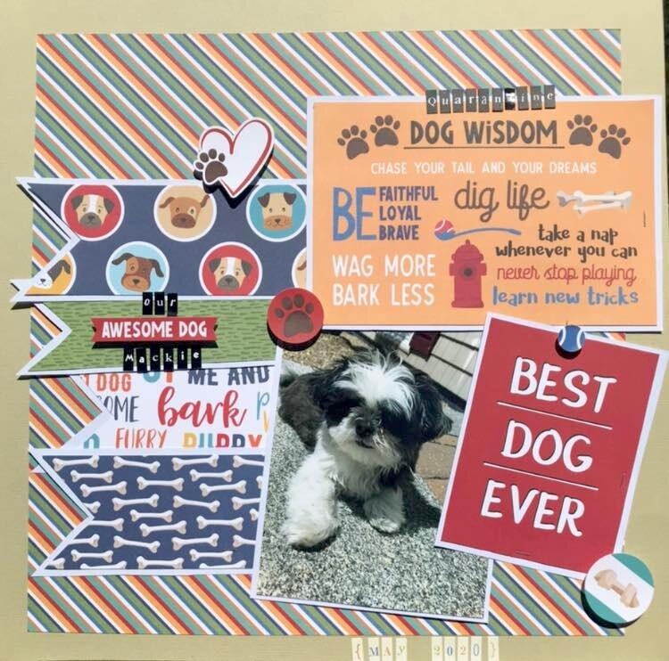 Quarantine Dog Wisdom