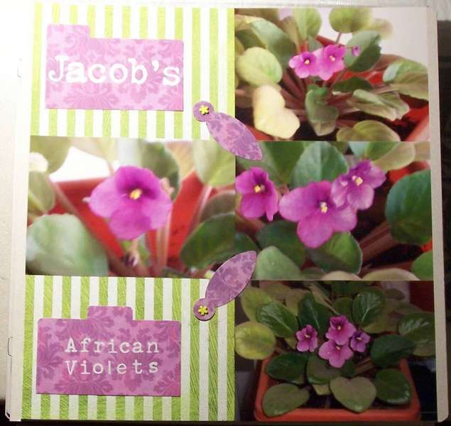 Jacob's African Violets
