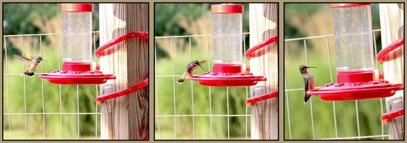 mini #3 bird