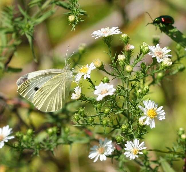 Butterfy & beatle