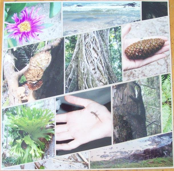 Right Page Jamie's Fraser Island Images