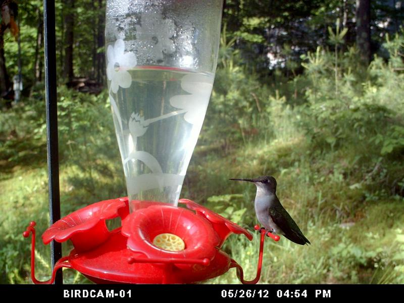 Mrs Hummingbird