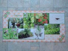 The Flora of Antigua