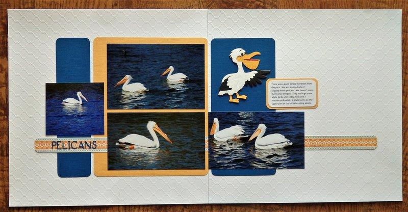 Pelicans, FL