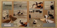 Pelicans of Galveston Bay, TX