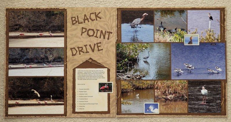 Black Point Drive at Merritt Island NWR, FL