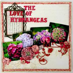 The Love of Hydrangeas