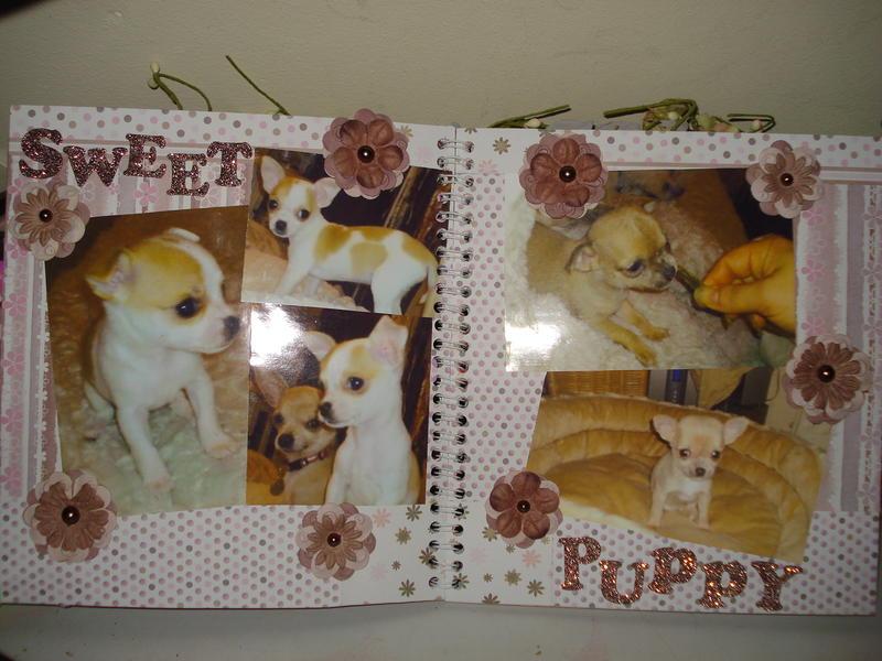 7 sweet & puppy