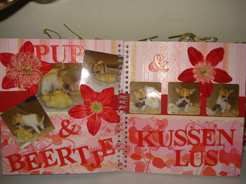 8 pup en beertje & kussenlus