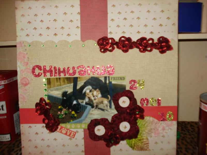 chihuahua friend 24mei'10