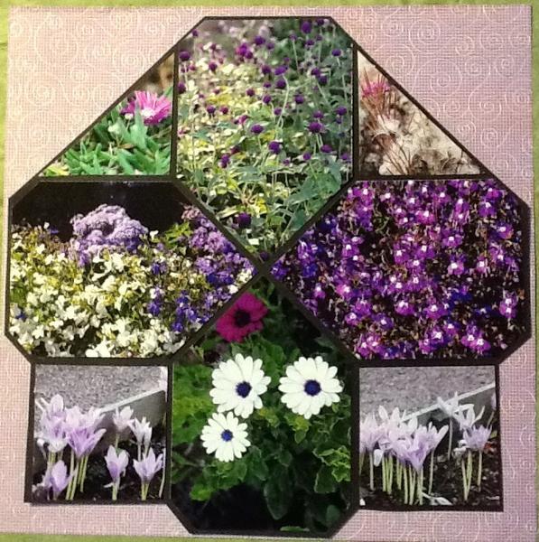 Study in lavender