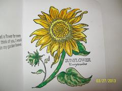 Sunflower, my favorite ever! This is inside of this card