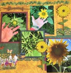 Stunning Sunflowers for Marci
