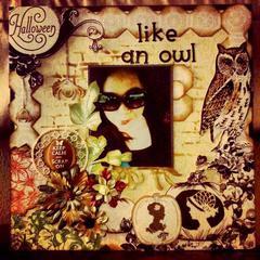 Like an Owl