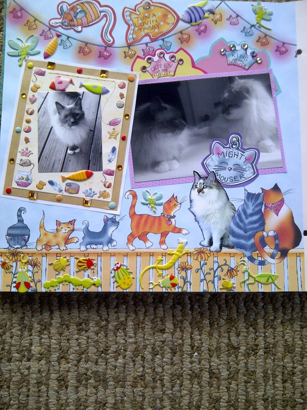 My Feline Family:  Pebbles & Dexter, Page 1