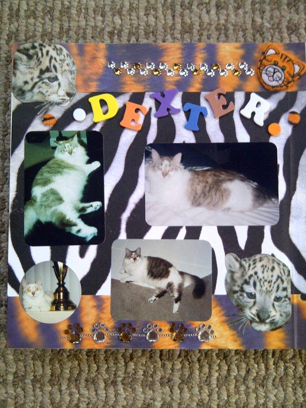 My Feline Family:  Dexter, Page 1
