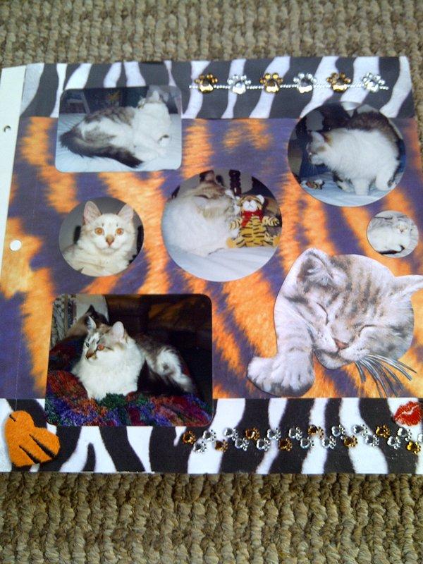 My Feline Family:  Dexter, Page 2
