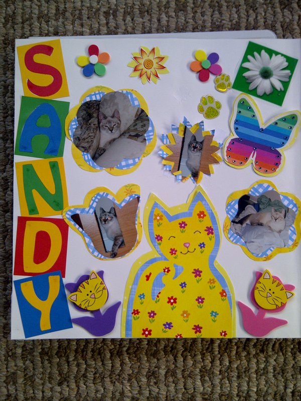 My Feline Family:  Sandy, Page 1
