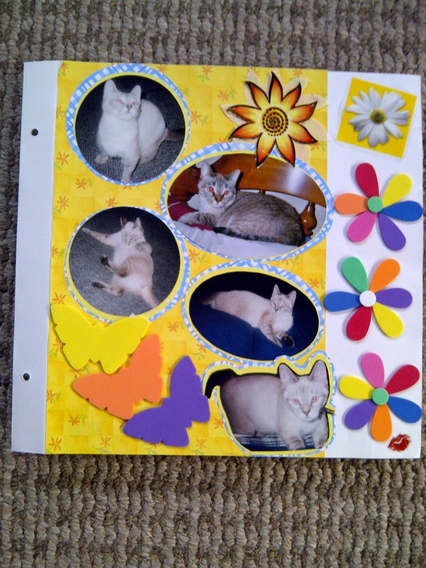 My Feline Family:  Sandy, Page 2